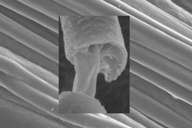 Researchers used electron microscopy to image the two differentiated layers in their core-sheath fibers. Photo by Sunthar Mahalingam/UCL