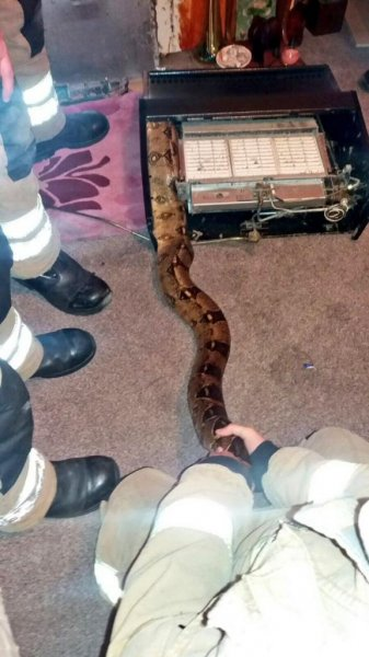 Firefighters save a boa constrictor from a gas-powered heater. Photo by Gainsborough Fire/Twitter