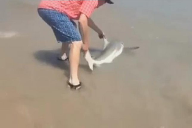 Watch: Man Guides Stranded Shark Back To Ocean