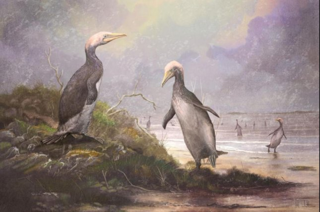 Some species of plotopterids, such as Copepteryx, grew to heights of more than six feet. Photo by Mark Witton