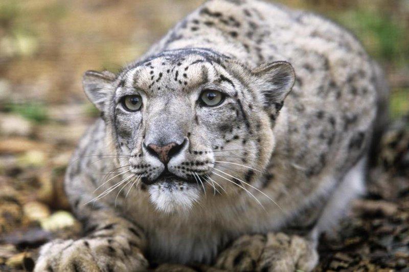 Snow Leopard Habitat Map 2015