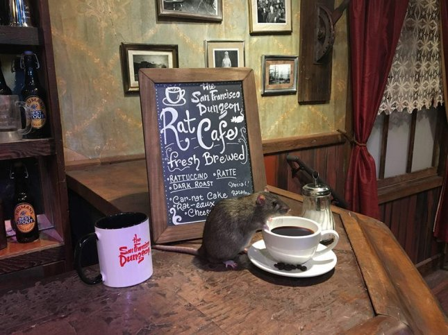 California attraction The San Francisco Dungeon announced it will host a two-day pop-up Rat Cafe, allowing guests to enjoy a pastry and coffee while interacting with domesticated rats. Photo by The San Francisco Dungeon/Facebook