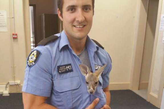 Watch: Orphaned kangaroo joey adopted by police officer