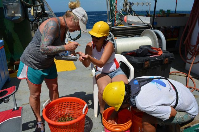 Researcher Erin Pulster, marine scientist at the University of South Florida, is pictured identifying fish specimens alongside research partners from the National Autonomous University of Mexico. Photo by USF