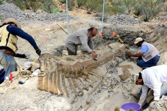 Large, intact fossil dinosaur tail uncovered in Mexico