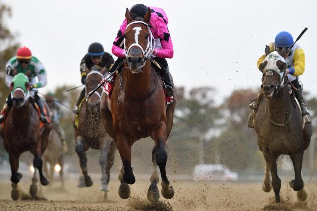 Maximum Security (pink silks) wins the Bold Ruler Handicap in October at Belmont Park. Photo courtesy of New York Racing Association