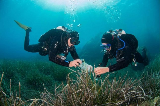 Divers search for novel marine bacteria that could yield new kinds of antibiotics. Photo by Christian Jogler/Friedrich Schiller University of Jena