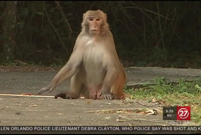 A family of monkeys have moved into a Florida neighborhood, about 30 miles away from where a loose monkey was spotted late last month. Screenshot: WFTV