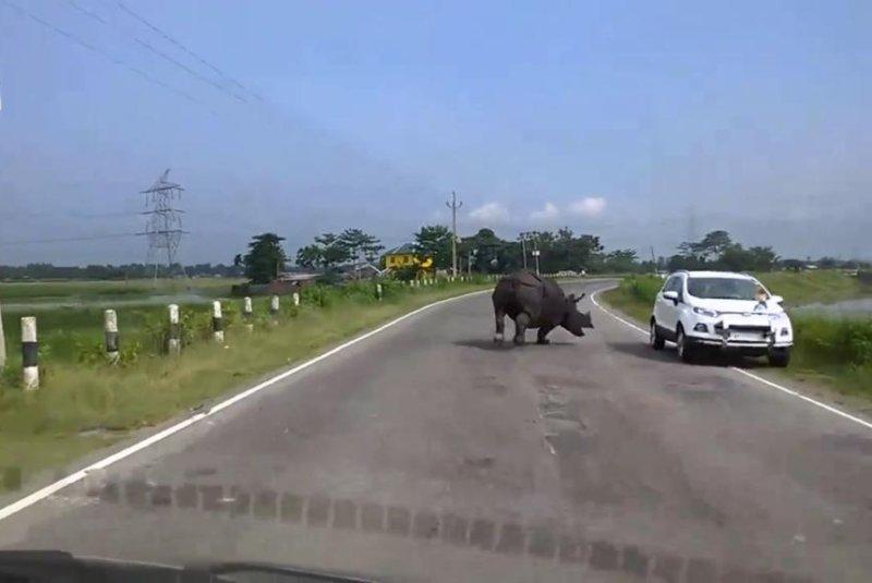 A rhinoceros runs amok on a stretch of highway in India. Screenshot: Newsflare