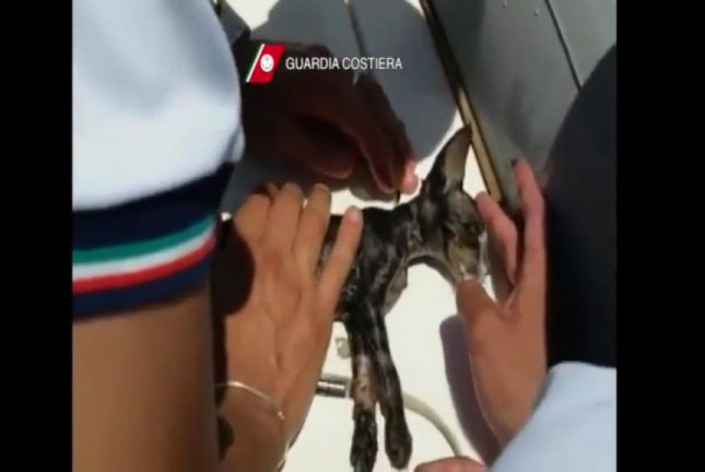 An Italian Coast Guard officer uses CPR to save a kitten found in the water in the port town of Marsala. Screenshot: Storyful