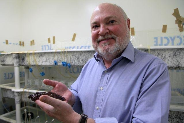Biologists transfer memory from one snail to another