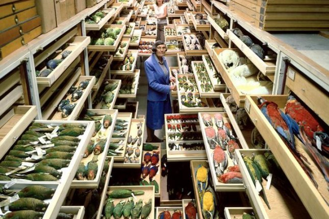 Roughly 40 percent of the newly sequenced genomes were obtained using tissue samples from the National Museum of Natural History's Avian Genetic Resources Collection. Photo byChip Clark/Smithsonian
