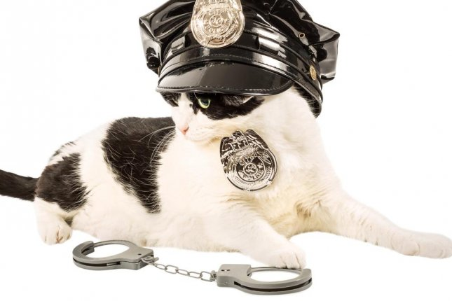 A letter from a 5-year-old Eliza Adamson-Hopper has inspired a U.K. police station to consider using cats on the force as well as dogs. Photo by Benny Marty/Shutterstock.com