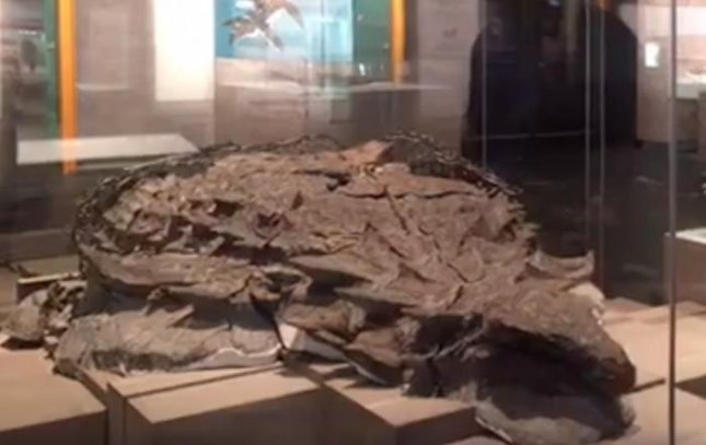 The Royal Tyrrell Museum of Palaeontology in Canada placed the world's most well-preserved armored dinosaur fossil on display. The nodosaur fossil was discovered accidentally by a shovel operator at an excavation site. Screen shot courtesy Travel Alberta