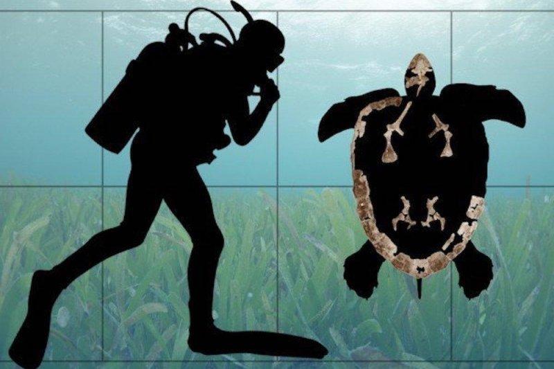 oldest sea turtle ancestor hailed from southeastern u s upi com