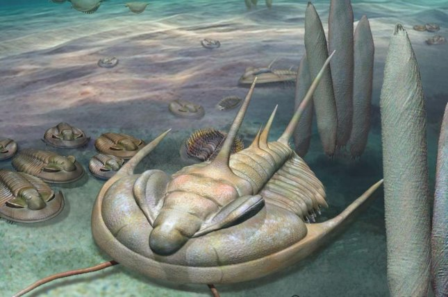 Trilobites featured a hard, horseshoe crab-like shell adorned with long, sharp spines. Photo by University of Adelaide