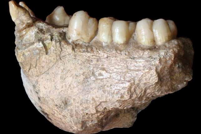Scientists recovered ancient proteins from the dental enamel of an extinct giant ape species. Photo by Wei Wang