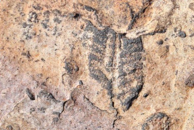 New research suggests land-dwelling species are responsible for the earliest fossil evidence of complex life on Earth. Photo by University of Oregon