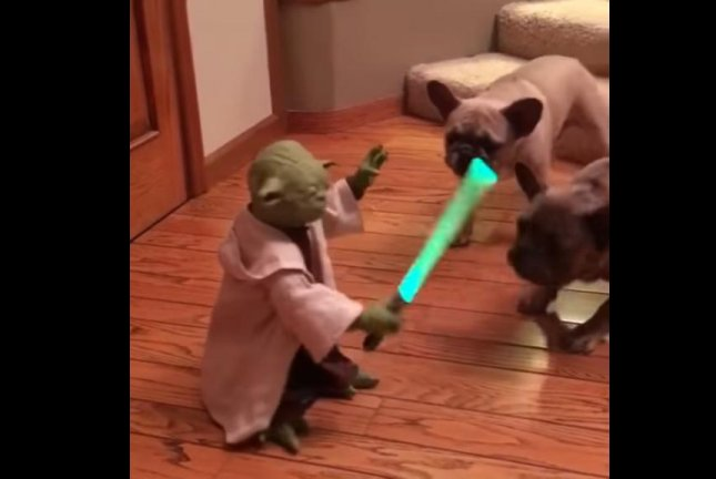 These dogs are apparently more into Star Trek. Screenshot: Stefan Moore/YouTube