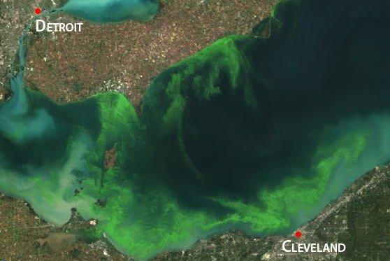 Algae bloom in Lake Erie, as seen from space. (NASA/NOAA)