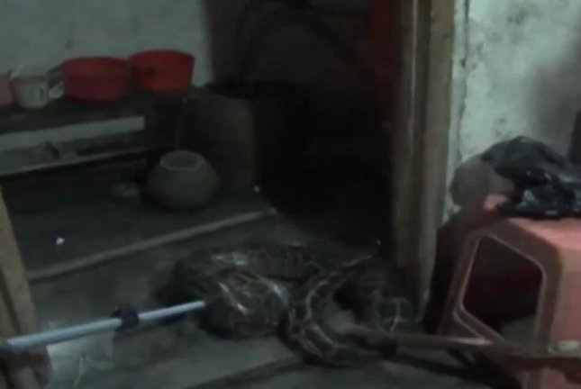 Firefighters capture a large python in the bathroom of a Chinese home. Screenshot: Newsflare