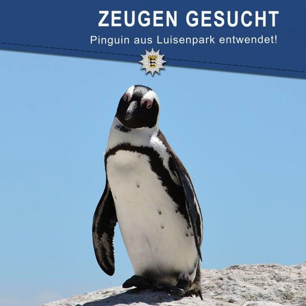 Police in Germany are seeking information about the theft of a Humboldt penguin from the Luisenpark zoo in Mannheim. Photo by Polizei Mannheim/Facebook