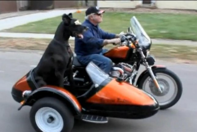 Elvis the Great Dane rides in his owner's side car. Screenshot: KCRG-TV