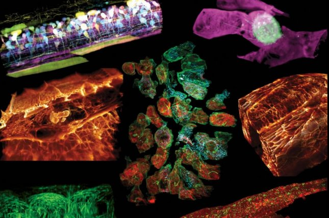 Microscope Captures 3D Views Of Cells Moving Within Living Organisms