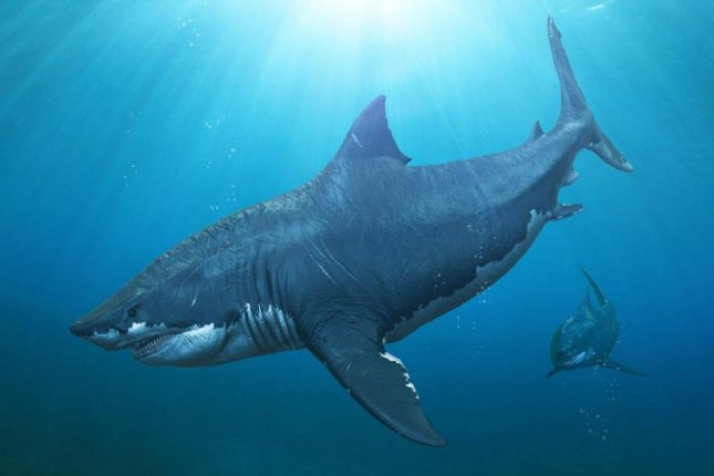 Megalodon, the largest shark in Earth's history, went extinct some 3.6 million years ago, according to new research. Photo by Herschel Hoffmeyer/Shutterstock