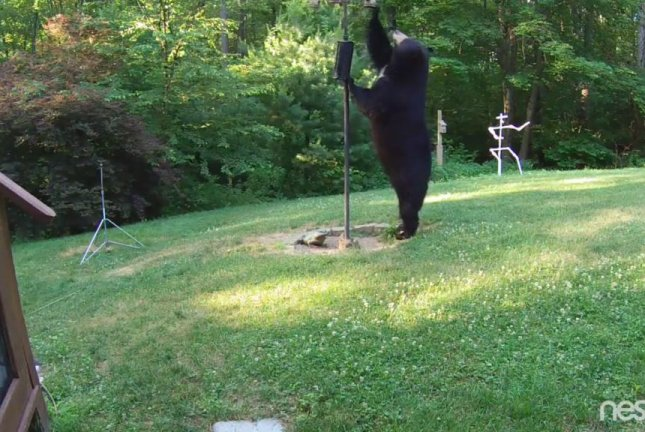 Watch Black Bear Swats Bird Feeder Placed High By
