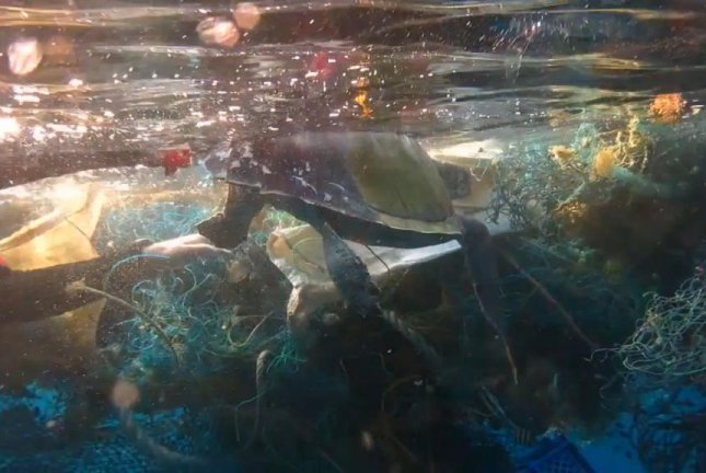 A turtle trapped in an abandoned fishing net gets a little help from a diver. Screenshot: Newsflare