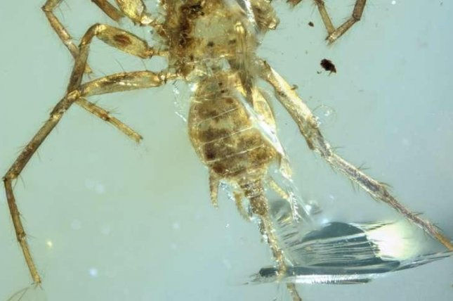 The newly discovered arachnid species, Chimerarachne yingi, was found in a piece of 100-million-year-old amber. Photo by University of Kansas