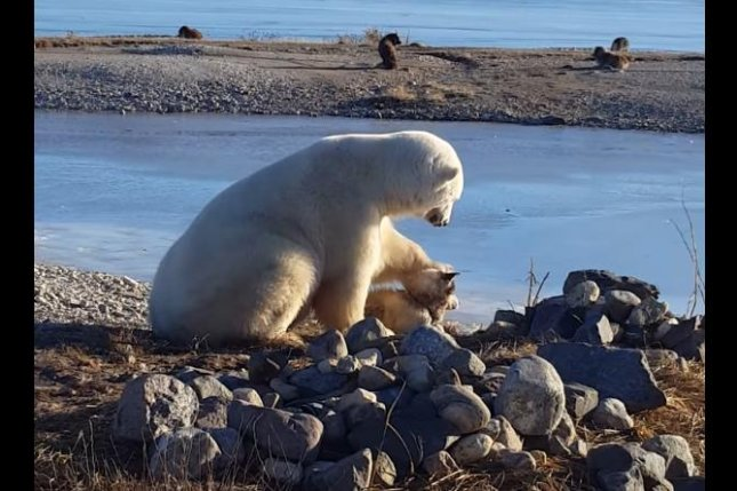 A polar bear has a tender moment with a dog in Manitoba. Screenshot: David de Meulles/YouTube
