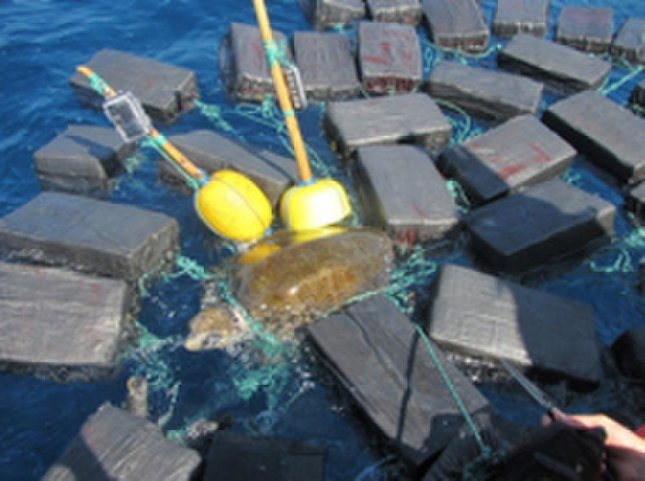 Giant sea turtle rescued from 1800 pounds of cocaine