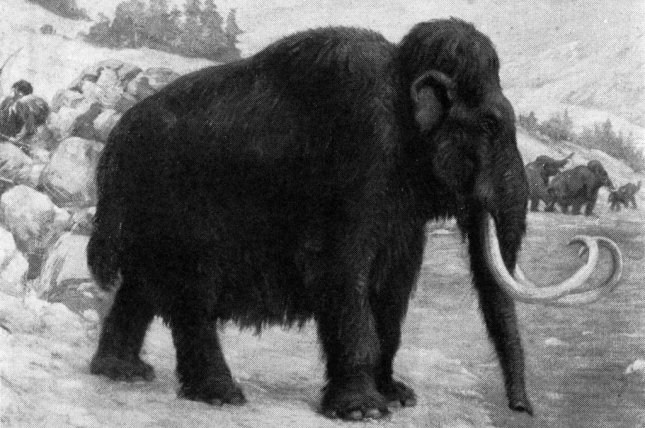 Research suggests genetic mutations had harmful physiological effects on the last isolated populations of woolly mammoths. Photo by Charles R. Knight/American Natural History Museum