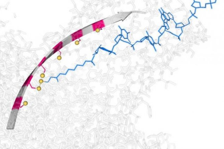 'Molecular hopper' can transport, manipulate single strands of DNA