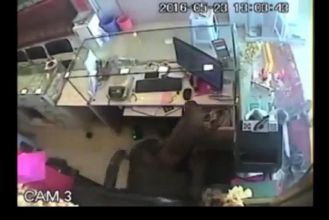 A pilfering primate steals from a cash drawer at an Indian jewelry store. Screenshot: Newsflare