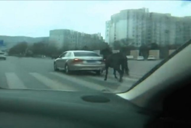 A horse towed behind a car on a busy stretch of highway in China. Screenshot: Newsflare