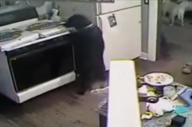 This pizza-stealing Labrador caused a kitchen fire when she turned on the gas stove while trying to snag a slice. Newsflare video screenshot
