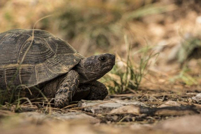 The tortoise wins the race of life, new research suggests. Photo by Pixabay/CC