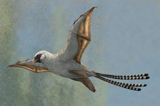 An artistic rendering depicts the dinosaur species Ambopteryx in a glide. Photo by Gabriel Ugueto