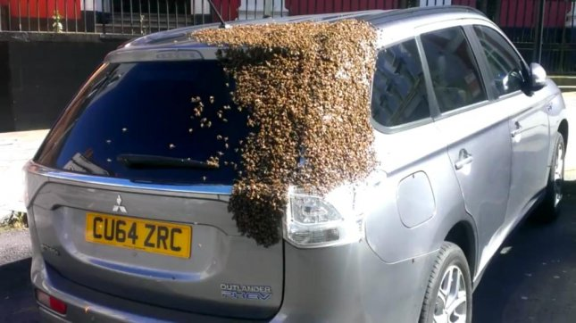 Bees cover the back of a Mitsubishi Outlander parked in Haverfordwest, Wales. Screenshot: Tom Moses/Facebook video