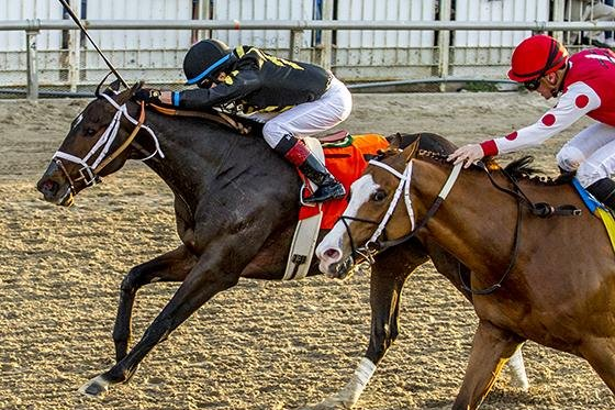 Bravazo earns a spot in the Kentucky Derby with a narrow win in Saturday's Risen Star Stakes at Fair Grounds in New Orleans. Photo courtesy of Fair Grounds