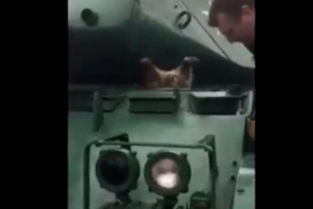 Men rescue 'fat' raccoon trapped head-first in hatch on U.S. Army tank