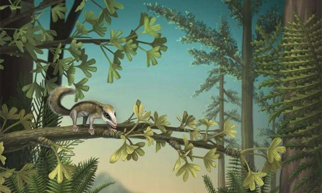 An artist's rendering of a Jurassic forest, featuring docodonts, a now extinct mammal species that experimented with a number of jaw and dental adaptations during the Middle Jurassic era. Photo by April Neander/Oxford