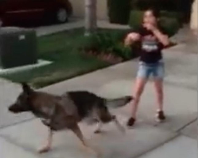 A 10-year-old California girl was able to extract a loose tooth that had bothered her for months with the help of her German Shepherd. Carlos Vasquez shared video of his daughter Sidney as she tied her loose tooth to her dog's harness and had it chase a ball.  Screen capture/Carlos Vasquez/Facebook