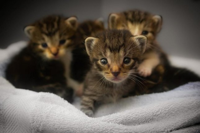 Police in Plattsburgh, N.Y., said six kittens heard crying inside a storm drain were rescued by members of the public and brought back to the police station, where they were fed by hand. Photo by 12019/Pixabay.com