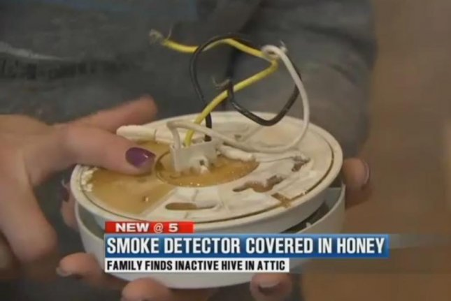 Honey-covered smoke detector leads to sticky attic discovery & Watch: Arizona womanu0027s attic full of honey dead bees - UPI.com