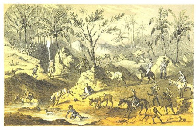 An illustration from Mountains and Molehills: or, Recollections of a Burnt Journal. ... With illustrations by Frank S. Marryat shows humans and animals crossing the Isthmus of Panama. Photo by British Library/PD