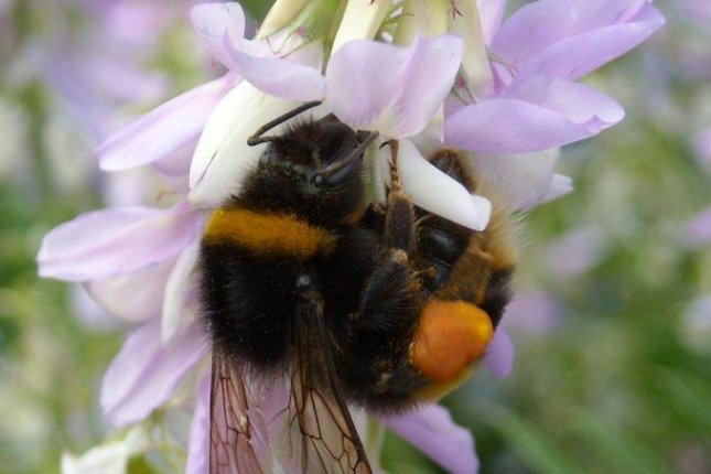 Pesticides affect bees' ability to locate flowers, drink nectar